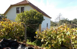5 BED FARMHOUSE WITH OVER 1 ACRE OF ESTABLISHED VINEYARD, MULTI FRUIT ORCHARD & GREAT VIEWS.