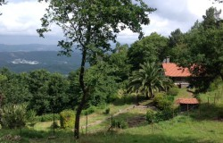 Three bed renovated house plus quaint one bedroom cottage, 2,200 sq m land. Perfect holiday rental income