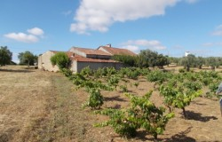 A traditional Portuguese farm house with flat land and bore hole for sale near Tomar