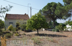 A country property with lots of land for sale only 10 minutes from Tomar