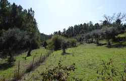 A building plot for sale near Cernache do Bonjardim