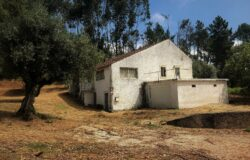 Detached 3 bed country home surrounded by mature olive trees, plus extra plot of land behind the house close to Alvaiazere