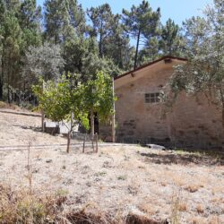 Rudimentary one bedroom house on large plot of land apt for planning permission for a family home at Sertã for 38000