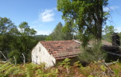 Small dilapidated house in private setting with approved reconstruction project in Dornes.