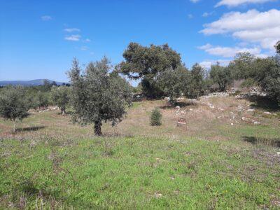 Good size building plot for sale near Alvaiazere