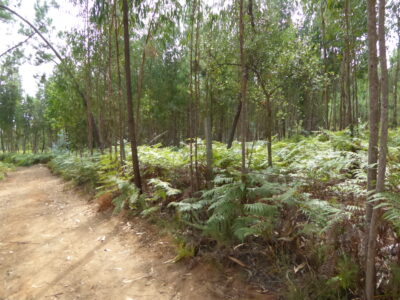 Mostly flat land with the possibility to build for sale near Sertã