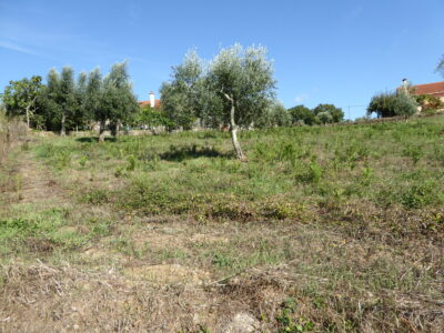 Urban plot for construction for sale