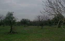 Large plot of rustic land for sale near Tomar central Portugal