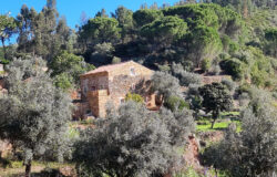 Renovated stone cottage in a stunning location, for sale only 10 minutes from Tomar, Central Portugal